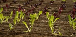 Pflanzen Bestimmen Nach Bildern : am besten pflanzen einen garten intensive bepflanzung im gem segarten ernten zu tisch garten m bel ~ Eleganceandgraceweddings.com Haus und Dekorationen