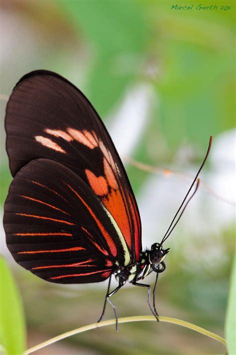 Botanischer Garten München Exotische Schmetterlinge by Tropische Schmetterlinge Im Botanischen Garten M 252 Nchen 04