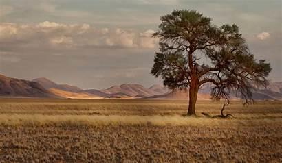 Plains Landscape Trees Desktop Backgrounds Wallpapers Wallup