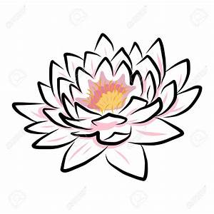 23864476-hand-drawing-water-lily-lotus-flower-Vector-EPS10 ...