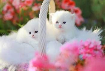 Gambar Anak Kucing Lucu Semua Yang Kamu Mau