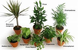 14 Plantes Dpolluantes Pour Votre Bureau