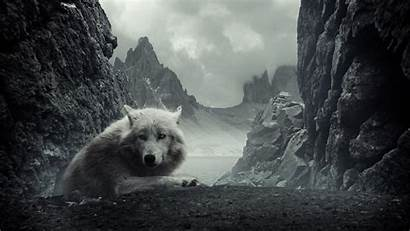Wolf Wallpapers Mountains Backgrounds Rocky Wolves Animals