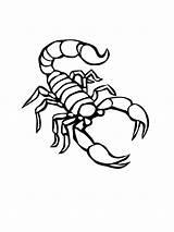 Scorpion Coloring Printable Tattoo Animal Colorear Desert Skorpion Tattoos Drawing Escorpion Scorpions Kolorowanki Dibujo Dzieci Dla Scorpio Outline Animals Sheet sketch template