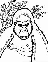 Coloring Pages Gorilla Cartoon Gorillaz Printable Animals Cliparts Clipart Animal Gorila Ape Library Ge Opa Snowflake Sketch Getcoloringpages Popular Template sketch template