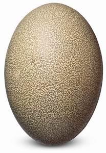Bird Eggs | Bird Egg Identification | DK Find Out