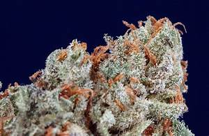 LA Confidential Weed Review
