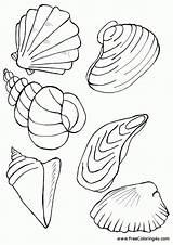 Coloring Shells Seashells Printable Template Templates Starfish sketch template