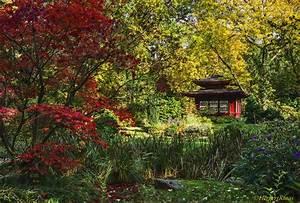 Garten Im Herbst : herbst im japanischen garten foto bild natur herbst landschaft bilder auf fotocommunity ~ Watch28wear.com Haus und Dekorationen
