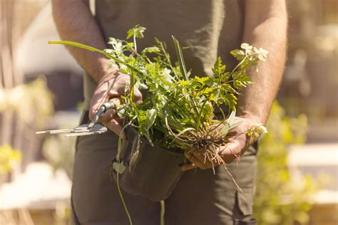 Keep Weeds Out Of Garden by How To Prevent Weeds