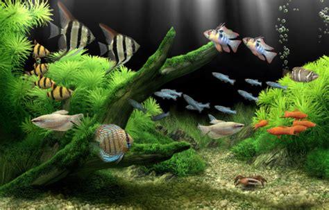 Animated Aquarium Wallpaper For Windows 7 Free - animated aquarium wallpaper for windows 7 free