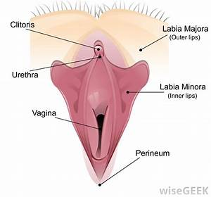 What Is A Vaginal Orgasm   With Pictures