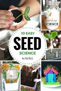 Seed Experiments and Seed Science and STEM activities for Kids