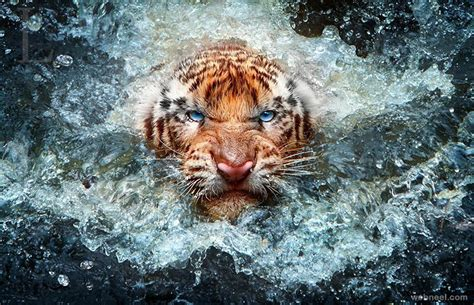 stunning examples  award winning wildlife photography