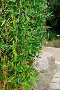 Bambus Im Garten Vernichten : gartenbambus schneiden ~ Michelbontemps.com Haus und Dekorationen