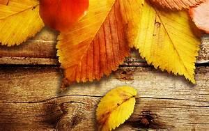 Bilder Herbst Kostenlos : kostenlos bl tter im herbst tapete bilder wallpapers und co herbst bl tter herbst und bl tter ~ Somuchworld.com Haus und Dekorationen