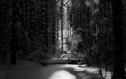 Forest Background Desktop Wiki Pixelstalk