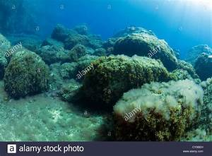 Rocks covered with algae in the underwater landscape at Sa ...