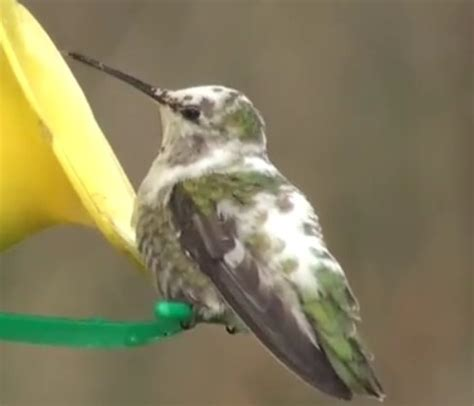 434 best images about hummingbird on pinterest baby