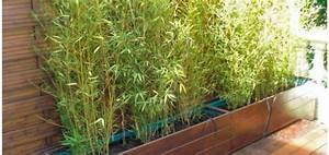 Bac Rectangulaire Pour Bambou : bac rectangulaire pour bambou bac bambou terrasse bac a ~ Nature-et-papiers.com Idées de Décoration
