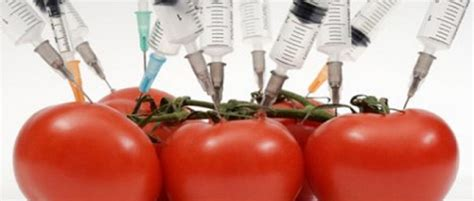 The Reality Of Chemical Terrorism In Our Food