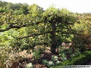 Quand Planter Un Pommier : la taille des pommiers ~ Dallasstarsshop.com Idées de Décoration