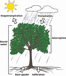 To Protect Our Water Resources  Plant A Tree