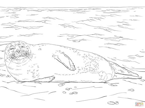 Harbor Seal Lying On The Beach Coloring Page Free