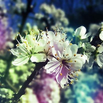 Spring Ipad Springtime Screensavers Wallpapers Desktop Iphone