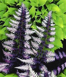 Farn Im Garten : schmuck farn japanese painting 1a qualit t baldur garten ~ Orissabook.com Haus und Dekorationen