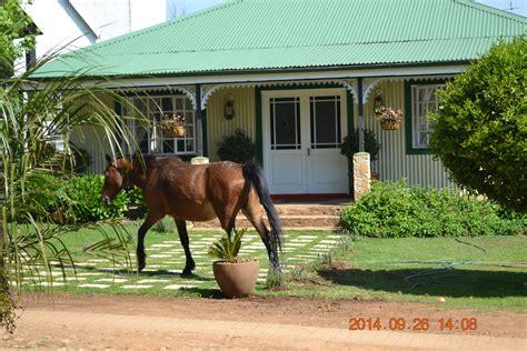 horses wild africa south mpumalanga roam hoop