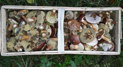 Massenhaft Pilze Im Garten by Pilze Im Garten Bilder Pilze Im Garten Foto Bild Pflanzen