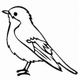 Robin Coloring Bird Pages Easy sketch template
