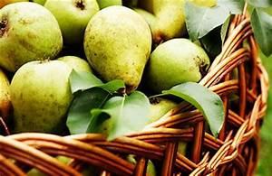 Wann äpfel Ernten : kernobst richtig ernten und lagern praktische tipps ~ Lizthompson.info Haus und Dekorationen