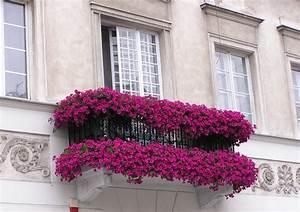 Bac A Fleur Balcon : fleurs de balcon en plein soleil id es sur les arrangements ~ Teatrodelosmanantiales.com Idées de Décoration