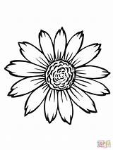 Sunflower Coloring Pages Flower Printable Flowers Drawing Watercolor Colors Sketchite sketch template