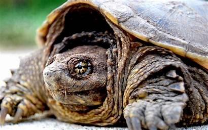 Tortoise Turtles Close Wallpapers Closeup Desktop Amphibians