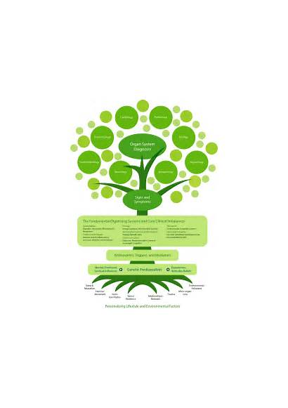 Medicine Functional Center Natural Holistic Integrative Integrated