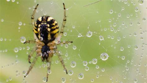Spinnen Vertreiben Hausmittel by Spinnen Vertreiben Hausmittel Spinnen Vertreiben Bek