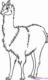 Llama Coloring Pages Lama Drawing Draw Cartoon Pajama Step Drawings Animal Easy Printable Sketch 1077px 46kb Getcolorings Farm Clipartmag Line sketch template