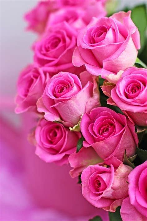 Valentine Pink Red Roses