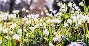 Garten Im März : der fr hling naht tipps tricks bew sserung garten im ~ Lizthompson.info Haus und Dekorationen