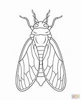 Cicada Coloring Pages Drawing Printable Line Super Drawings Insect Supercoloring Colouring Bug Bible Illustration Animals Preschool Dot Cycle Nymph Tweet sketch template