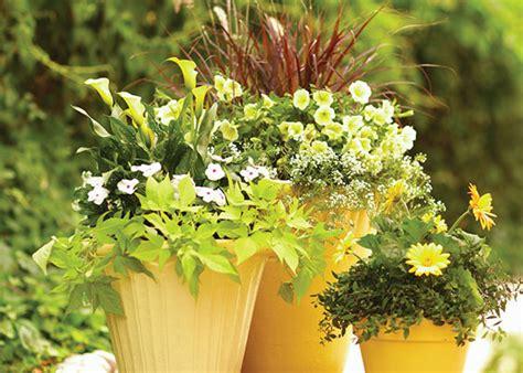 plan a container garden garden club