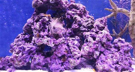 plants   coral reef characteristics