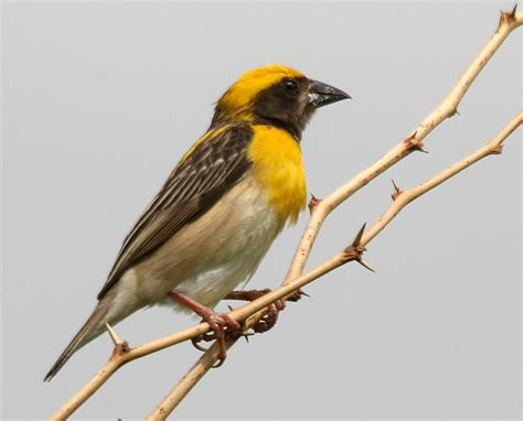 tamil birds  types  kuruvi part
