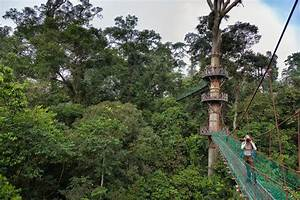 Best Lodges to Experience the Real Borneo, Malaysia ...