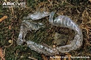 common garter snake photo thamnophis sirtalis g85332