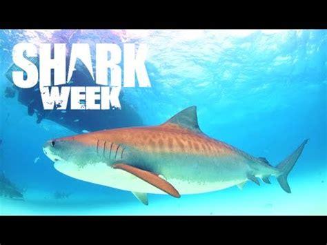 amazing facts  tiger sharks shark week youtube