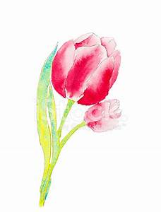 Watercolor of A Tulip Stock Photos - FreeImages.com